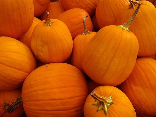 Pumpkinjpg